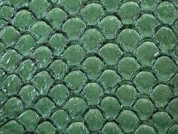 Détail écailles cuir de poisson tilapia vert brillant cuir en stock