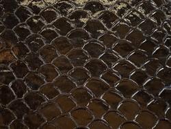 Détail écailles cuir de poisson tilapia noir glossy Cuir en Stock