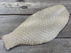 Peau de cuir de poisson tilapia ivoire glossy métallisé argent maroquinerie bijoux accessoire cuir en stock