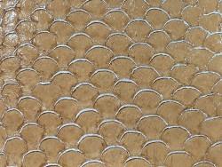 Détail écailles cuir de poisson tilapia fauve métallisé argent Cuir en Stock