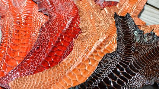 Combinaison de couleur cuir peau pattes de coq poulet cuirenstock