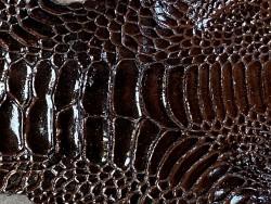 Détail grain de peau patte de coq poulet luxe exotique marron satiné Cuir en stock
