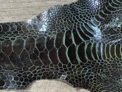 Détail grain de peau cuir patte de coq poulet vert forêt cuir en stock
