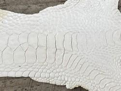 Détail grain peau patte de coq poulet blanc luxe exotique cuir en stock