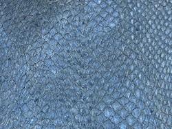 Détail écailles peau cuir poisson saumon bleu nacré bijoux maroquinerie exotique Cuir en Stock