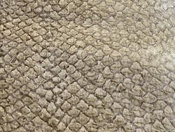 Détail écailles - peau cuir de poisson - Perche du Nil - Beige - maroquinerie bijoux - luxe exotique - Cuir en stock