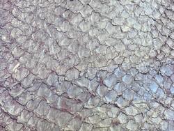 Détail écailles - cuir de poisson - Perche du Nil - parme nacré - bijoux maroquinerie - Cuir en Stock