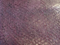 Détail écailles - peau cuir poisson - Perche du Nil - aubergine - exotique - bijou - maroquinerie - Cuir en Stock