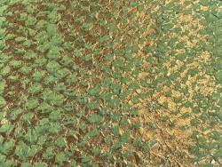 Détail écailles - cuir de poisson - Perche du Nil - vert doré métallisé Cuir en Stock