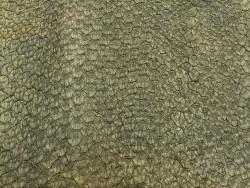Détail écailles - cuir peau poisson - Perche du Nil - vert kaki mat - Cuir en Stock