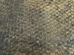 Détail écailles - cuir de poisson - Perche du Nil - Bronze antique - métallisé - Cuir en Stock