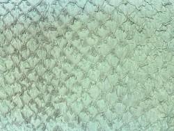 Peau de cuir de poisson Perche - Vert d'eau mat