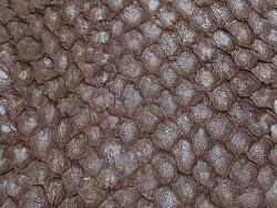 Détail écailles - cuir de poisson - Perche du Nil - marron mat - Cuir en Stock