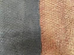 Détail écailles - cuir de poisson - lot de peaux - Perche du Nil - marron - Cuir en Stock
