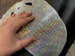 Peau de galuchat - argent multi couleurs - reflets colorés - luxe - exotique - Cuirenstock