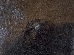 Détail grain - perle centrale - peau galuchat - cuir exotique - noir - Cuir en stock