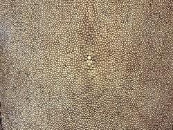 Détail grain de peau de galuchat - perle centrale - brun clair - cuir exotique - Cuir en stock