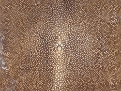 Détail grain de peau de galuchat - brun - perle centrale - cuir exotique - Cuir en stock