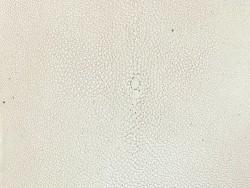 Détail perle centrale - peau de galuchat - blanc - exotique - luxe - Cuir en Stock