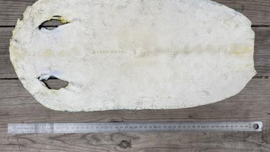 Envers peau de galuchat - grain perlé semi-poli - motif zig zag bleu - bijou - gainage d'objet - cuirenstock
