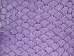 Petite peau de tilapia violet