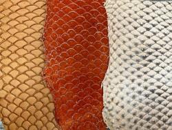 Détail écailles peaux de cuir de poisson tilapia - orange - soldes - bijou - accessoire - incrustation - Cuir en stock