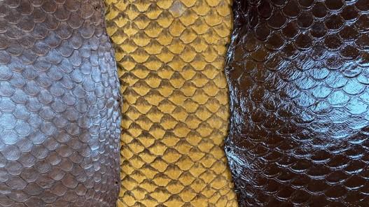 Détail écailles peaux cuir poisson tilapia - camaïeu marron - bijou - accessoire - incrustation - Cuir en stock