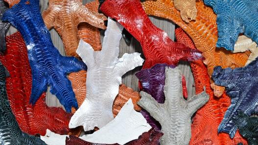 Choix couleurs qualité luxe exotique vente détail patte de coq poulet cuirenstock