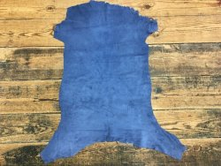 Agneau velours bleu