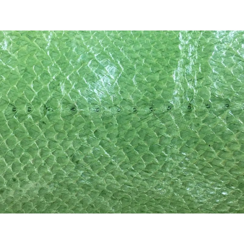 Peau de saumon vert