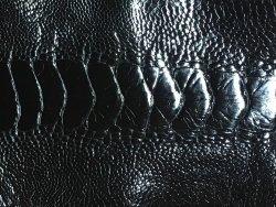 Patte d'autruche noir