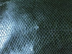 Grand morceau de peau de saumon vert