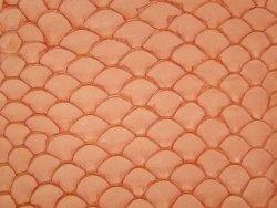 Petite peau de tilapia orange