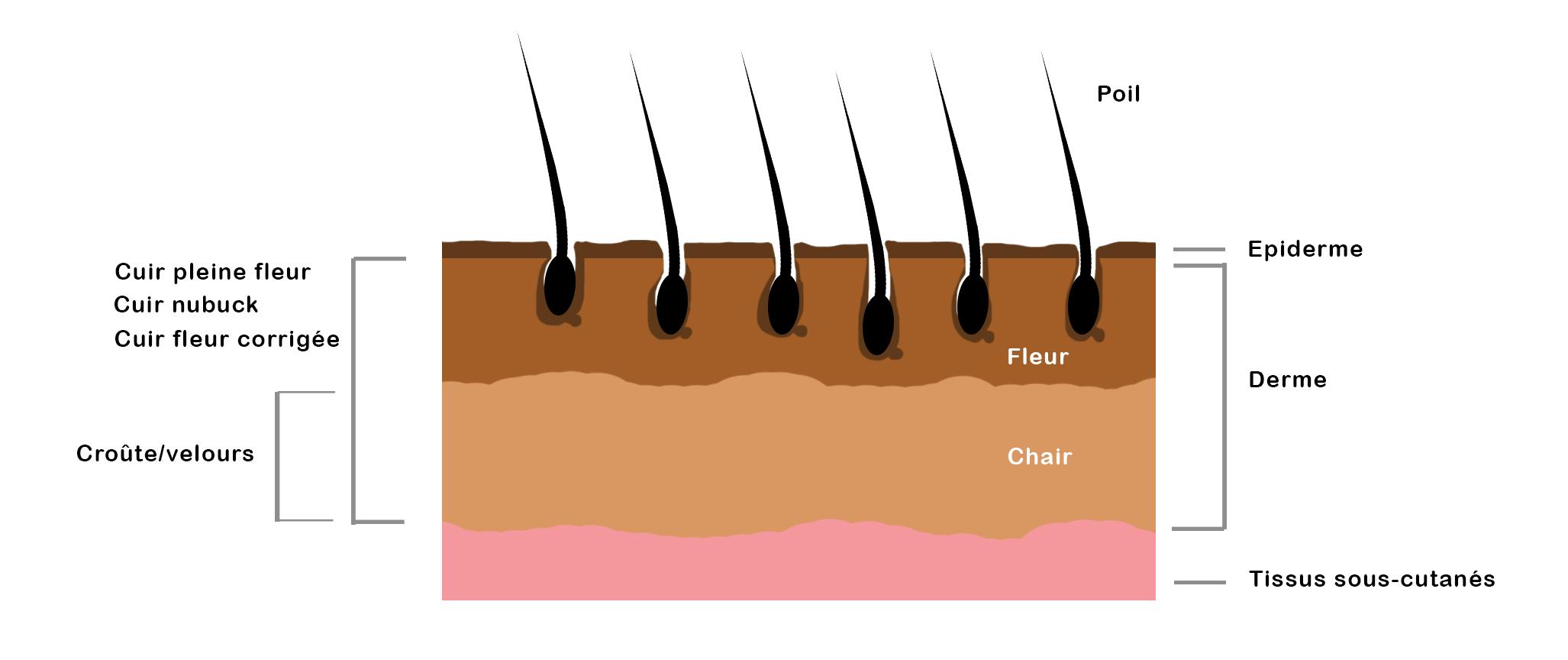 schéma peau cuir Cuirenstock