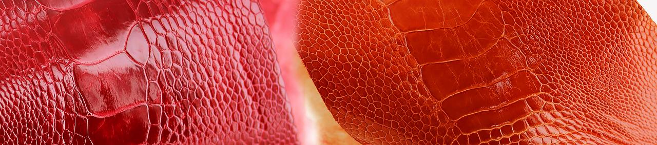peau de cuir d'autruche - patte d'autruche cuirenstock
